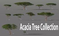 Acacia Tree Collection
