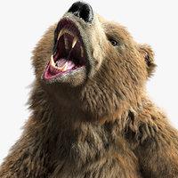 brown bear pose model
