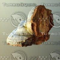 Forest Mushroom - Polypore - Ganoderma