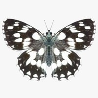 realistic marbled white 3D model