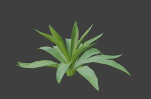 agave plant nature 3D model