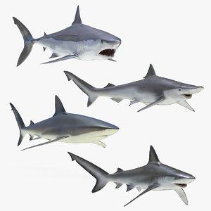 rigged sharks 4 3D model