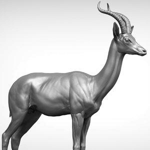 gerenuk litocranius walleri 3D