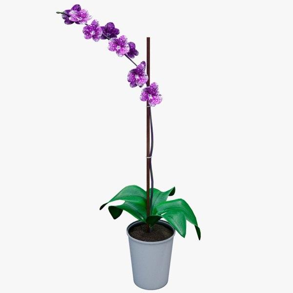 3D realistic purple orchid plant