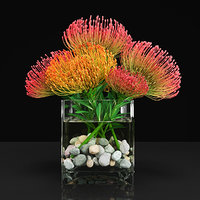 3D plant 13 model