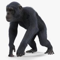 dark chimpanzee walking pose model