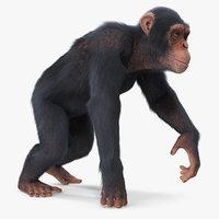 3D light chimpanzee walking pose