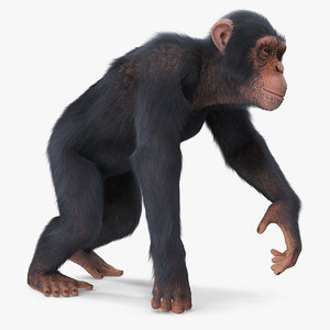 3D light chimpanzee walking pose