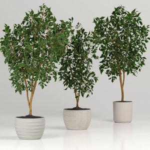 3D tree plant nature model