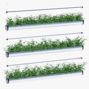 3D pendularis plants