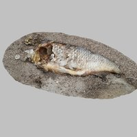 dead fish model