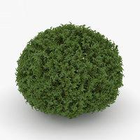 3D shrub bush plant