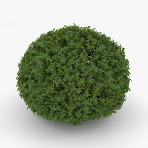 3D shrub bush plant