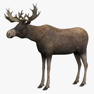 3D moose beast animal