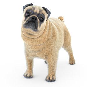 dog pug 3D model