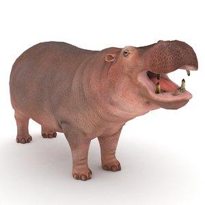 hippopotamus hippo 3D model