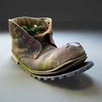 Old Boot With Plants Inside