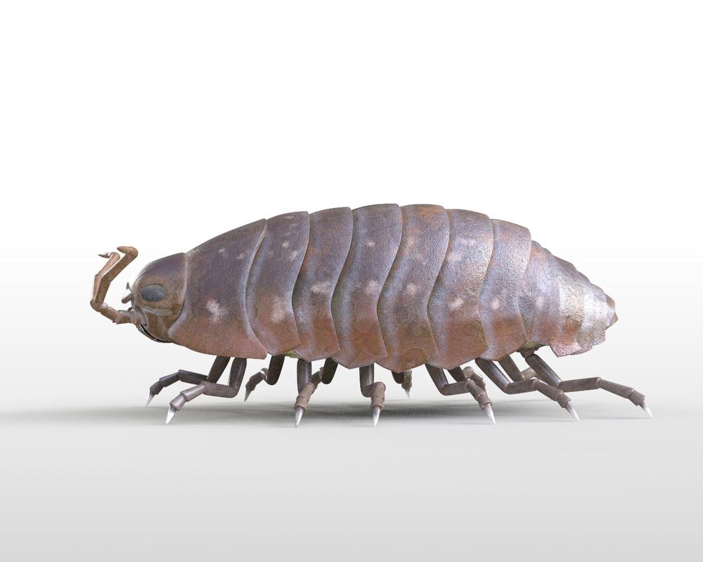pillbug bug 3D model
