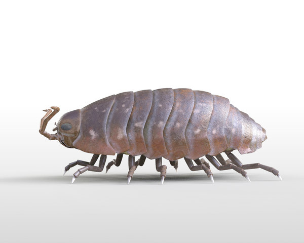 pillbug bug 3D model