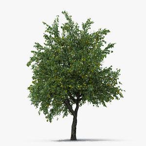 3D pear tree