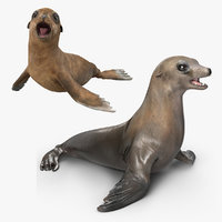 3D model sea lion baby rigged