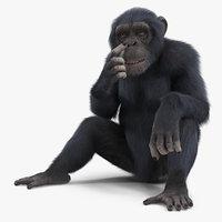3D dark chimpanzee animal fur