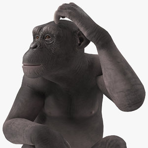 dark chimpanzee sitting 3D