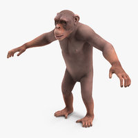 light chimpanzee 3D model