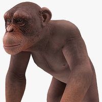 walking light chimpanzee 3D