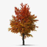 autumn pear tree model
