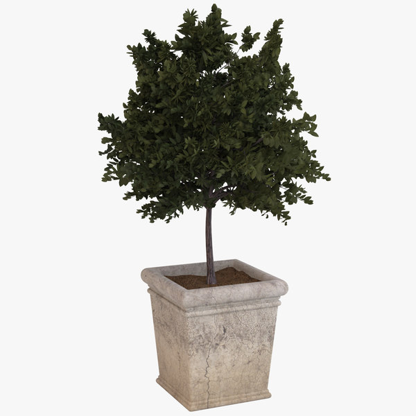 decorative pot plant 3d model