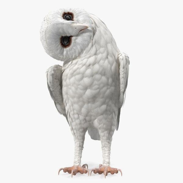 3D white barn owl