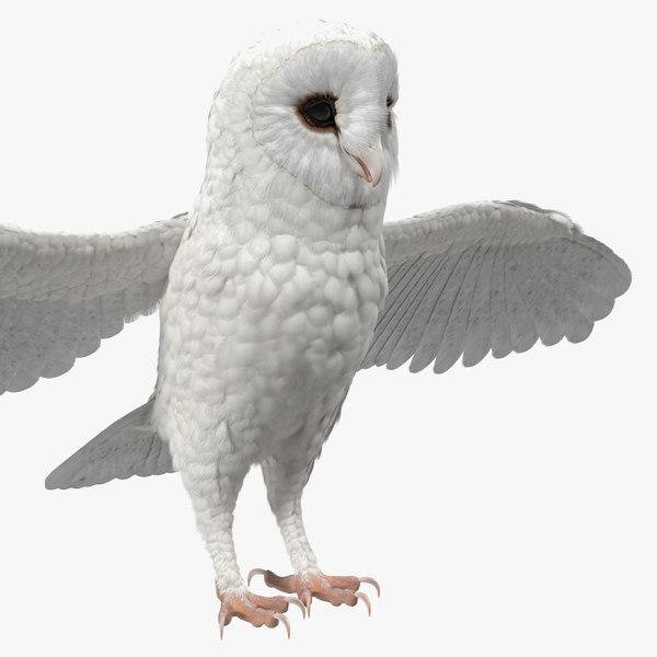 3D model white common barn owl