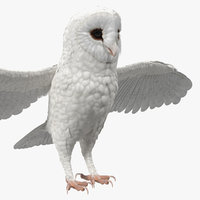 3D model white common barn owl