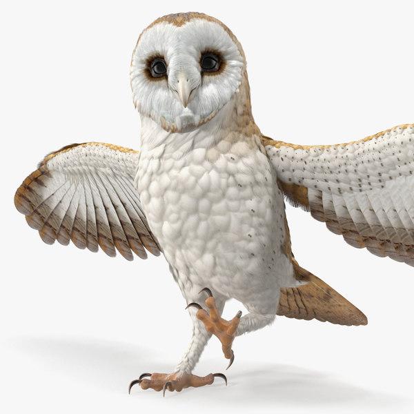 barn owl rigged model