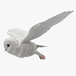 3D white barn owl rigged model