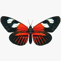 3D realistic doris longwing model