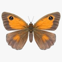 realistic meadow brown model