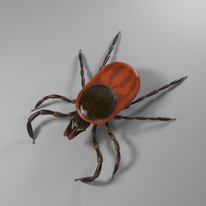 3D tick rigged