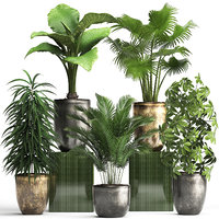 houseplants exotic plants 3D model