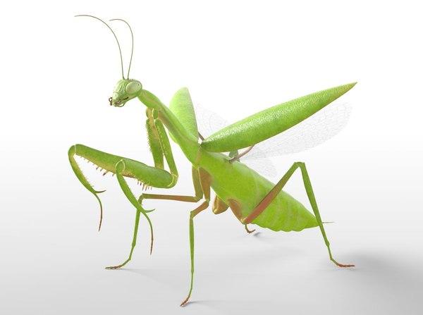 3D mantis ant