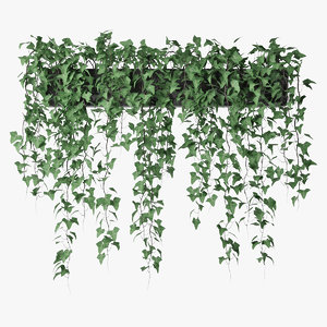 3D model ivy pot