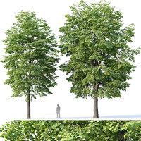 Tilia europaea #4 H12-14m Two tree set