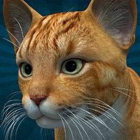 ANML-004 Cat