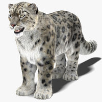 3D model snow leopard furry animal hair