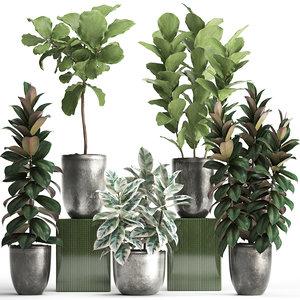 houseplants exotic plants ficus 3D