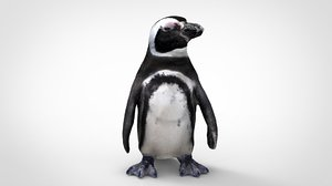 3D penguins animal nature