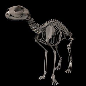 animal bone 3D model