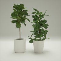 fiddle leaf plants 3D
