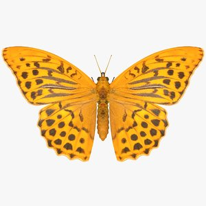 3D realistic silver washed fritillary model